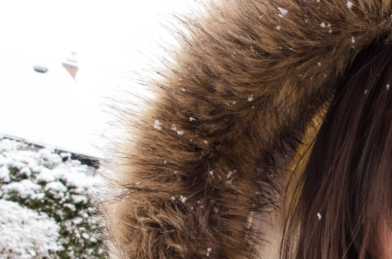 snow and fur | eyes/ears/mouth+lens